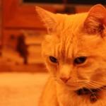 ペンション飼い猫カカ